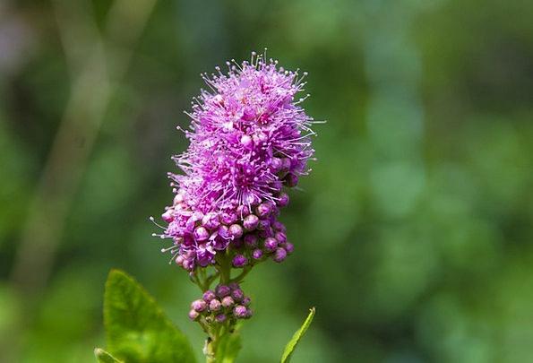 Flower Floret Landscapes Instruction Nature Violet