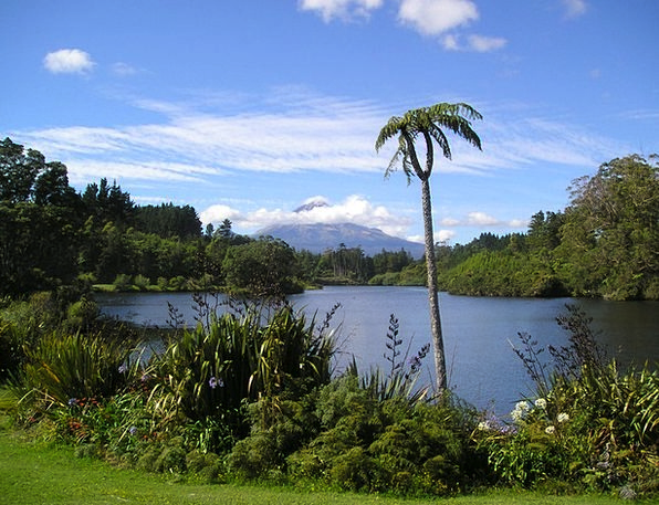 New Zealand See Understand Volcano Rießenfarn Fern
