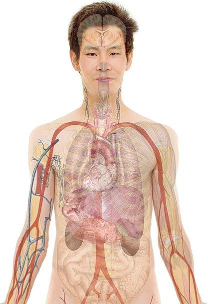 Anatomy Structure Medical Gentleman Health Face Ex