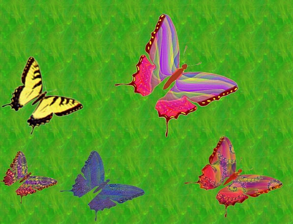 Butterflies Nerves Landscapes Nature Flying Hoveri