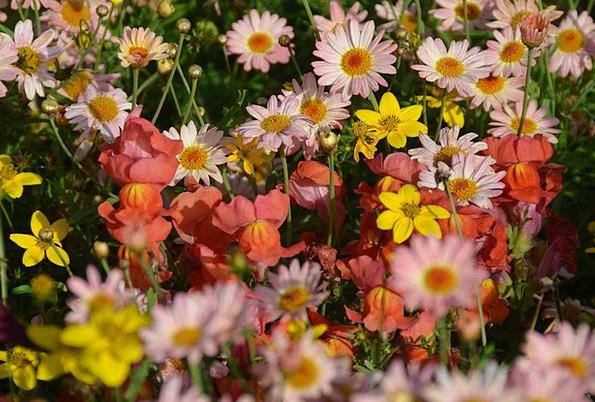 Flower Meadow Landscapes Plants Nature Plant Veget