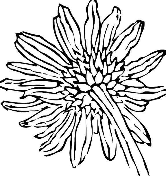Daisy Flower Petals Sunflower Coneflower Gerbera E