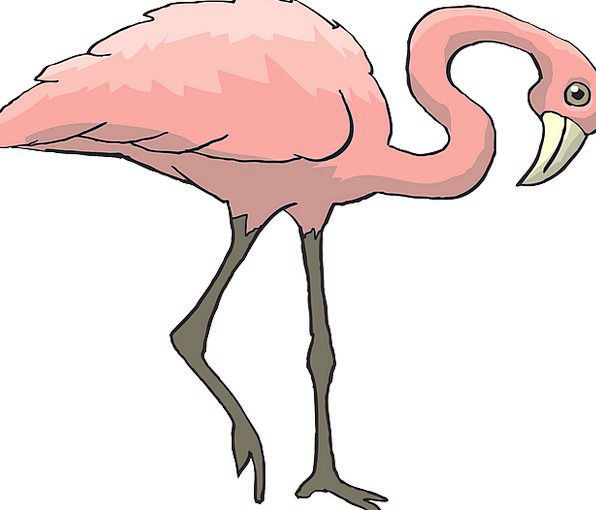 Pink Flushed Fowl Flamingo Bird Long Extended Free