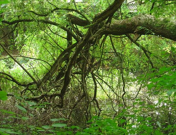 Baustamm Landscapes Knotted Nature Forest Woodland