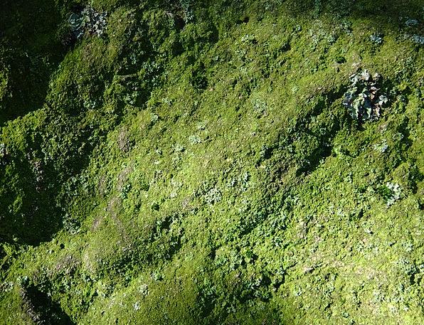Moss Landscapes Nature Stone Pebble Lichen Living