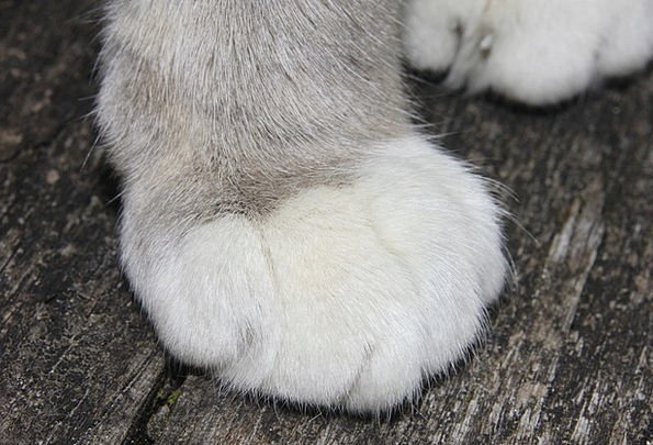 Cat Feline Occur Happen Cat'S Paw Detention Custod