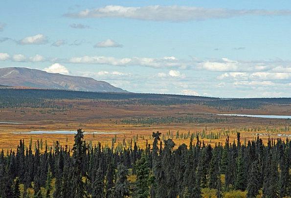 Alaska Landscapes Woodland Nature Mountain Crag Fo
