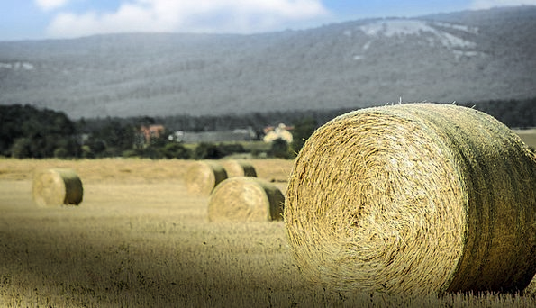 Bale Bundle Grass Agriculture Farming Straw Harves