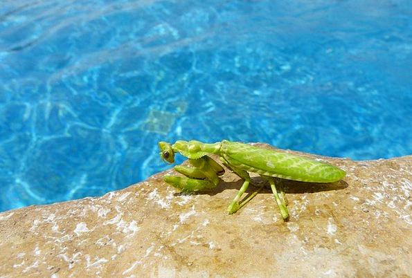 Mantis Bug Animal Physical Insect