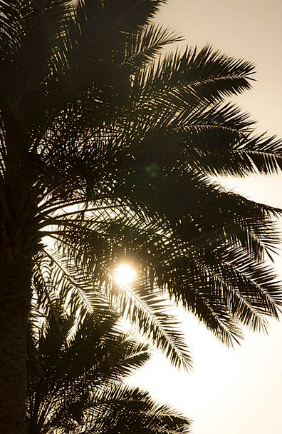Palm Tribute Vacation Travel Setting Sun Evening S