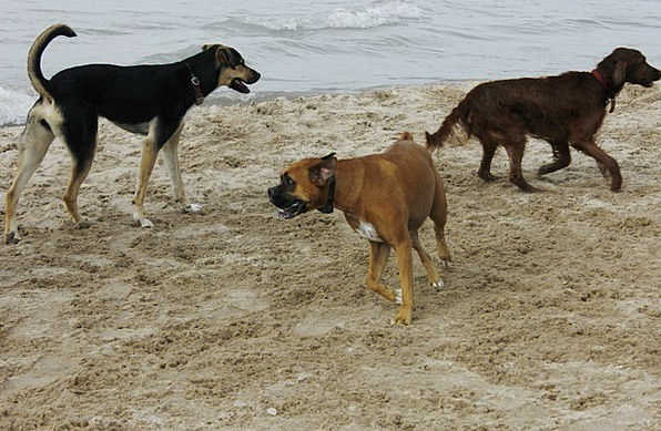 Dogs Canines Vacation Seashore Travel Pet Domestic