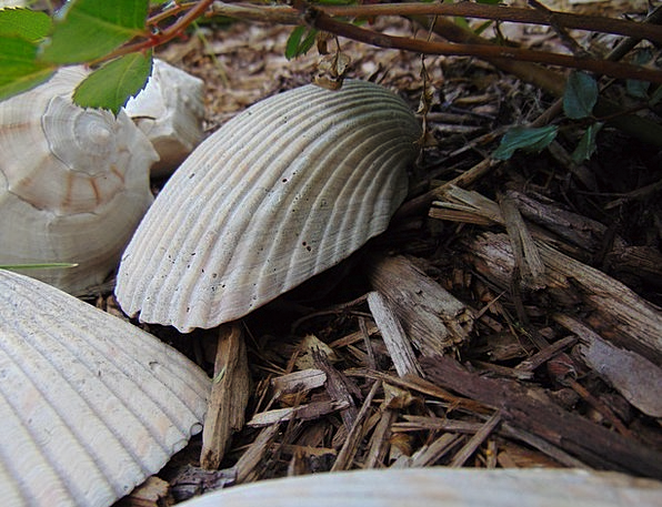 Sea Shells Landscapes Covering Nature Decorative O