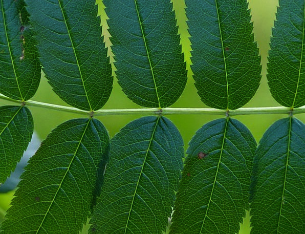 Leaves Greeneries Landscapes Nature Leaflets Flyer
