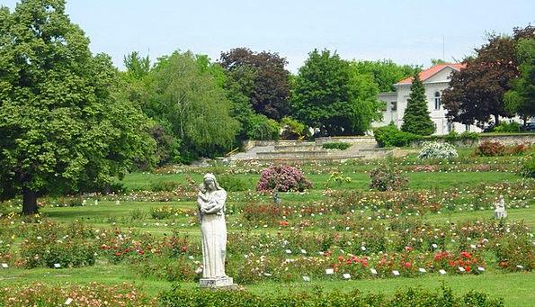 Rose Garden Landscapes Nature Colorful Roses Rose