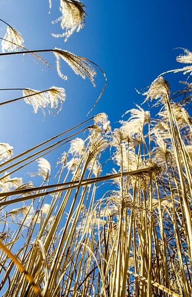Plant Vegetable Landscapes Azure Nature Sky Blue B