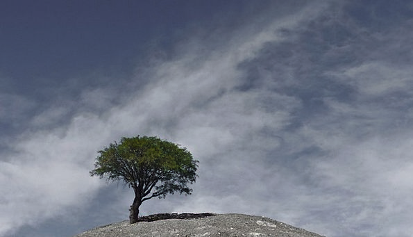 Andes Landscapes Sapling Nature Argentina Tree Sky
