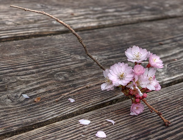 Flowers Plants Landscapes Nature Spring Coil Flowe