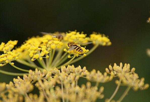 Wasp Landscapes Floret Nature Flora Vegetation Flo