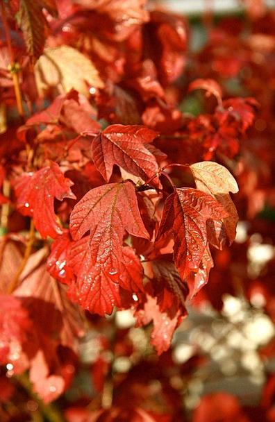 Browse Glance Landscapes Fall Nature Color Hue Aut
