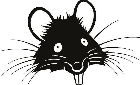Rat Swine Pests Teeth Fangs Vermin Free Vector Gra
