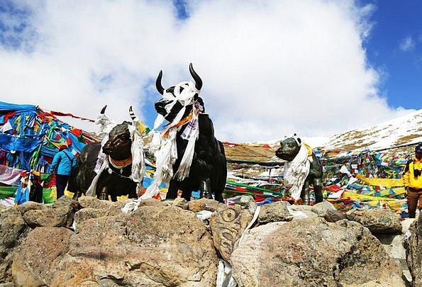 Tibet Yakou Mila Mountains Copper And Yak Blue Sky