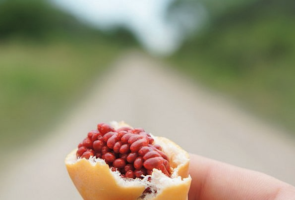 Fruit Of Passiflora Drink Ovary Food Passiflora Fr