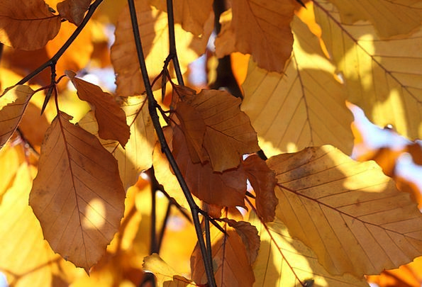 Leaves Greeneries Creamy Autumn Yellow Leafy Fall