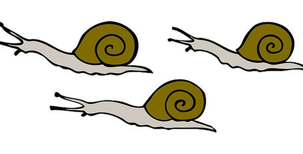 Movement Drive Moving Touching Snails Reptile Slow