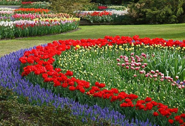 Tulips Textures Backgrounds Flower Floret Tulip Ho