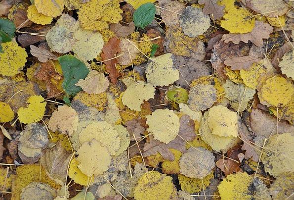 Autumn Leaves Fall Leaf Foliage Autumn Fallen Leav