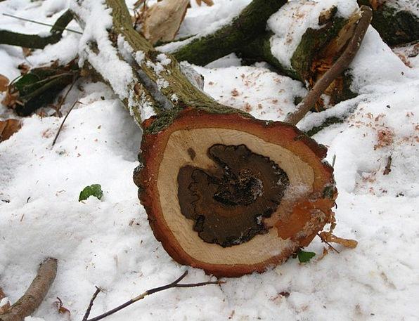 Baumstam Landscapes Nature Sawn Tree Grates Wood T