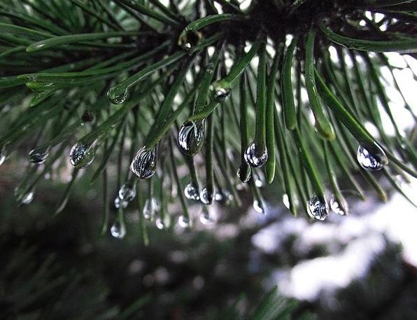 Needles Pointers Landscapes Drop Nature Raindrop D