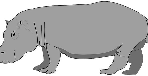 Hippo Leaden Hippopotamus Gray Heavy Wildlife Natu