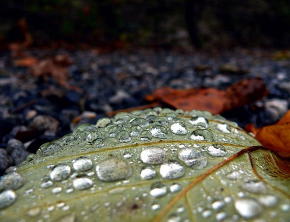 Drop Droplet Landscapes Volley Nature Leaf Foliage