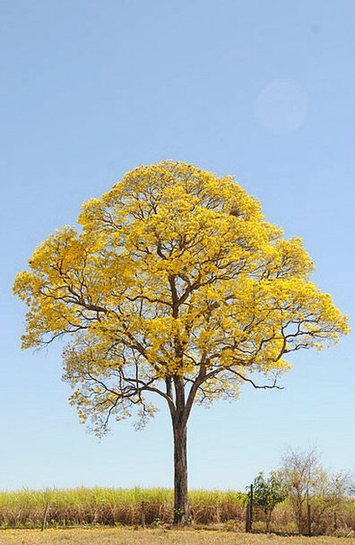 Tree Sapling Landscapes Creamy Nature Spring Coil