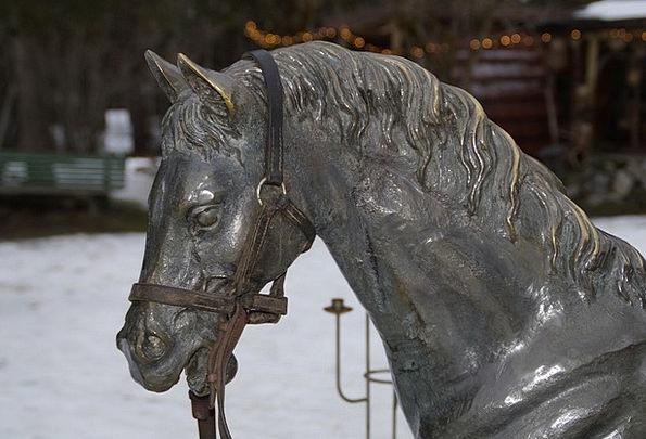 Horse Mount Portrait Representation Horse Head Scu