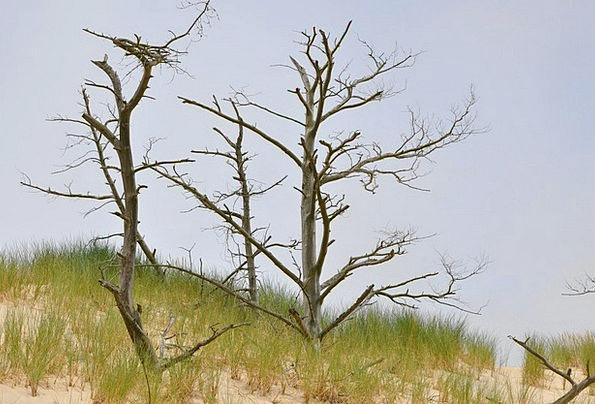 The Mobile Dune Landscapes Shingle Nature The Coas
