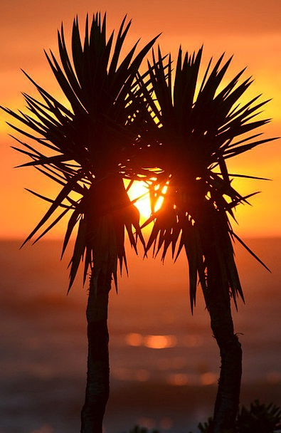 Palm Trees Vacation Tributes Travel Exotic Unusual