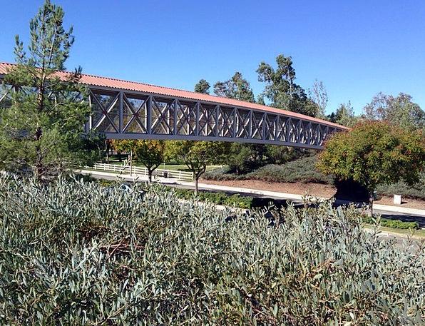 Pedestrian-Bridge Landscapes Greenery Nature Shrub
