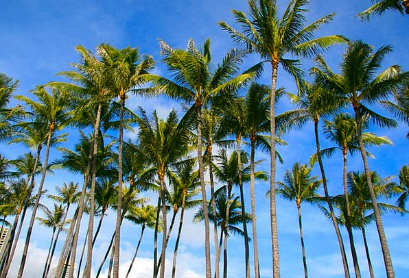 Palms Tributes Vacation Plants Travel Natural Usua