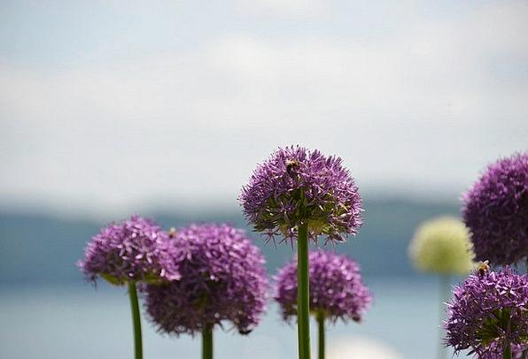 Flower Floret Landscapes Vegetable Nature Water Aq