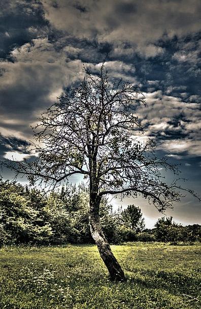Wood Timber Landscapes Nature Cloud Mist Hdr Veget