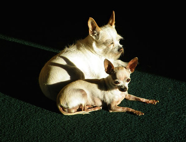 Dogs Canines Animals White Snowy Pets Young Togeth