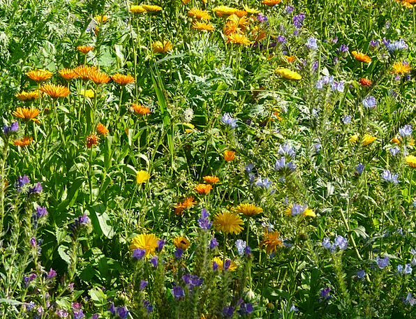 Summer Flowers Field Colorful Interesting Meadow S