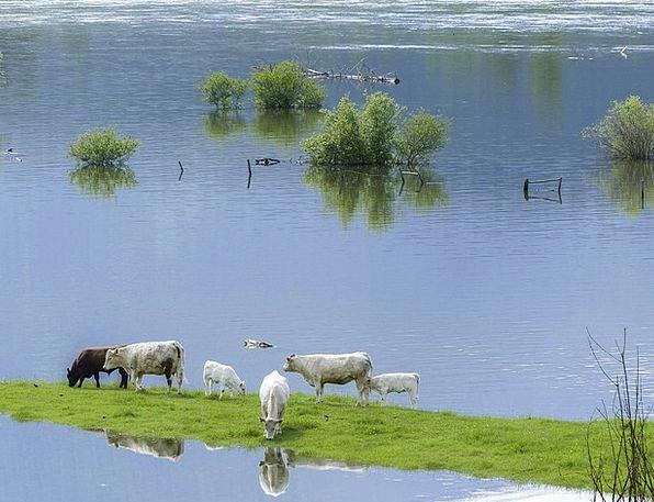 Cows Intimidates Landscapes Nature Feeding Nourish
