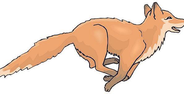 Happy Content Carroty Fox Deceive Orange Running C