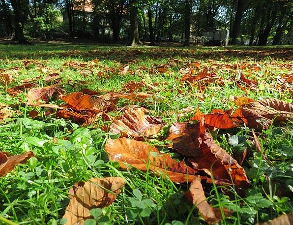 Autumn Fall Landscapes Greenery Nature Nature Coun