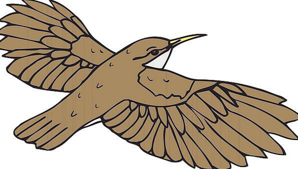 Brown Chocolate Fowl Flying Hovering Bird Wings An