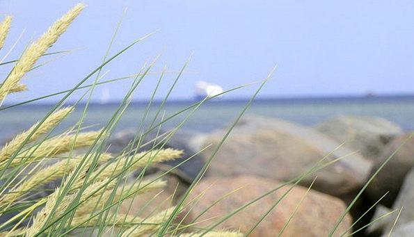 Grass Lawn Vacation Travel Wanderlust Desire to tr