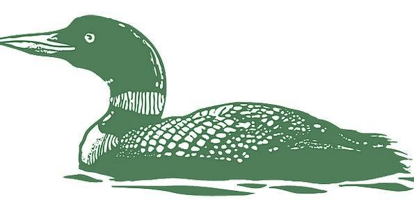 Green Lime Fowl Waterfowl Bird Lake Swimming Spinn